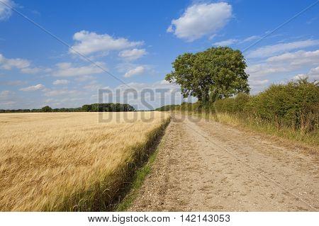 Ash Tree With Barley