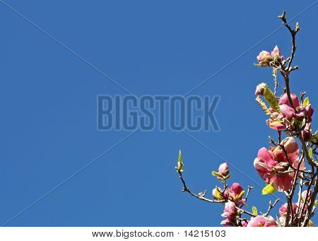 Pink Flowers on Branch