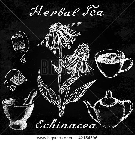 Echinacea hand drawn sketch botanical illustration. Vector drawing. Herbal tea elements - cup teapot kettle tea bag bag mortar and pestle. Medical herbs. Lettering in English. Effect chalk board