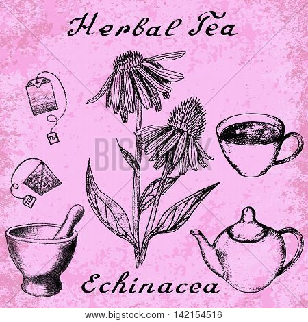 Echinacea hand drawn sketch botanical illustration. Vector drawing. Herbal tea elements - cup teapot kettle tea bag bag mortar and pestle. Medical herbs. Lettering in English. Grunge background