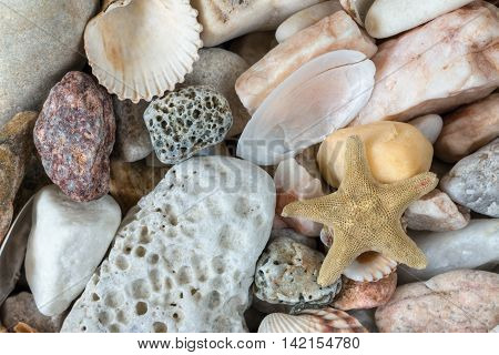 Various sea pebbles on the beach with shells