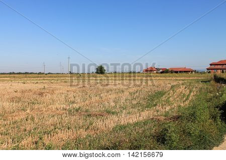 spacious sloping yellow field and blue cloudless sky
