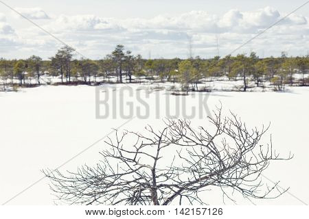 Dry tree branches against a landscape in front of a forest with low trees in the snow under white clouds