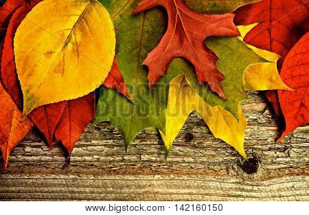 Horizontal Border of Variegated Autumn Leafs closeup on Rustic Wooden background