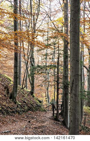 Hiking path with railing in the autumn deciduous forest. Seasonal natural scene. Tourism theme. Beautiful place. Vertical composition. Vibrant colors.