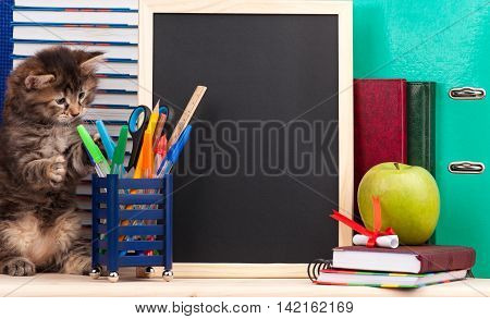 Cute siberian kitten with school accessories and black blank board for your text