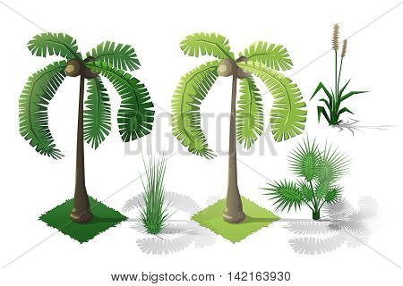 Isometric plants and grass, palm trees with transparent shadow for landscape game design