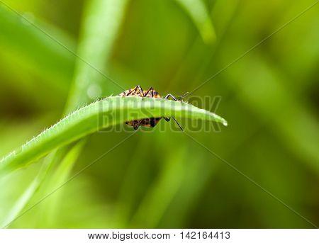 Hidden Bug