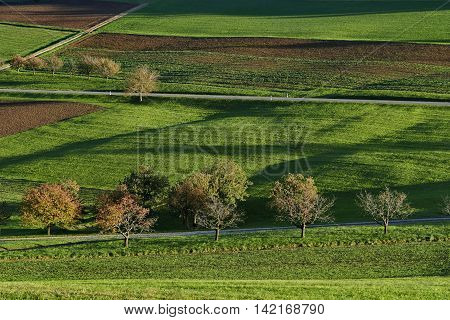 Meadow, acre, greenfield with shadows from evening sun