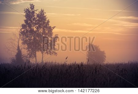 lonely tree at sunrise, Novgorod oblast, Russia