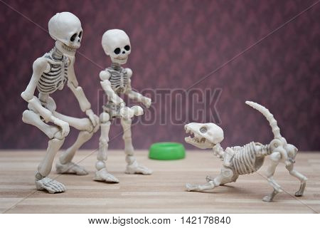 The little skeleton and his playful skeleton dog