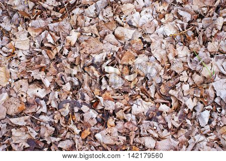 lot of dry leave of the floor in autumn