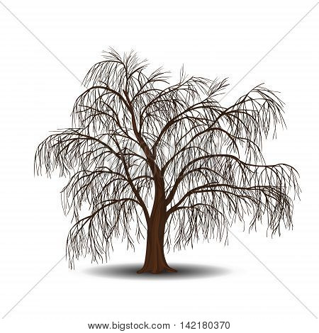detached tree willow without leaves on a white background