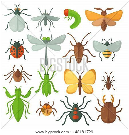 Set of various insects: butterfly, fly, beetle, dragonfly, spider, bee and ladybug. Vector illustration isolated on white background