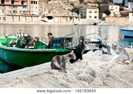 Odessa Ukraine - June 29 2009: Fishermen are working on the boat. Group of cats waiting for catch