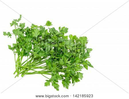 Bunch of fresh green parsley lined at the bottom left of the frame on a light background