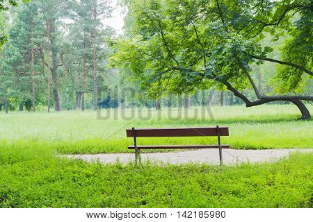 Bench near the alley against a background of a glade with deciduous trees and pines in the park
