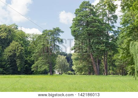 Glade in a park with a deciduous and conifers trees on the background
