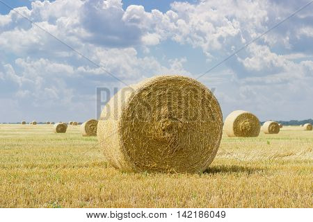 Large round straw bale of a barley on harvested field on a background of other bales and sky with clouds