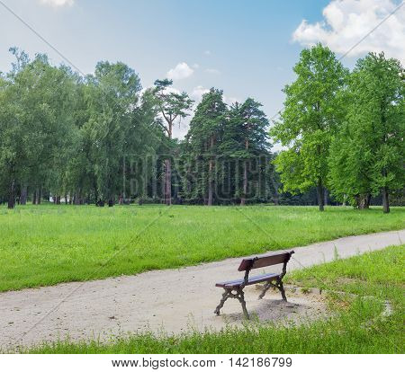 Glade in a park with pines and deciduous trees in the background and an alley with a bench in the foreground