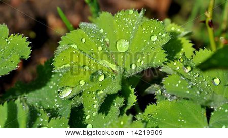 Water on plant