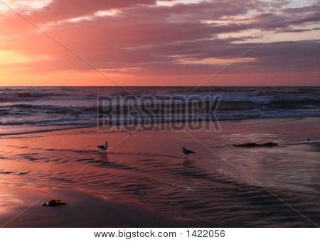 Evening At Moonlight Beach 1