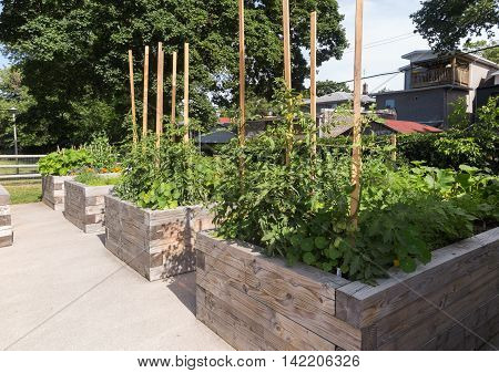 Raised garden beds in neighborhood garden in wooden planters