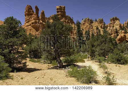 Red Canyon Hoodoos in Utah with trees and blue sky