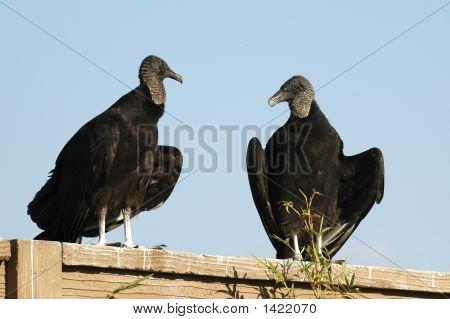 Backyard Gossips