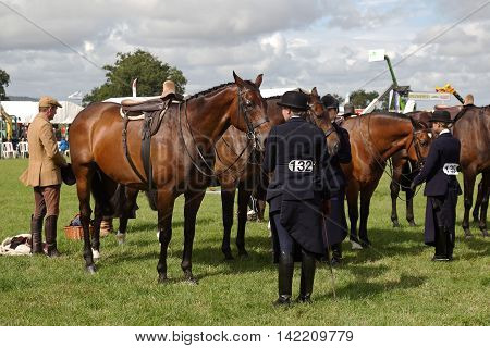 WEEDON, UK - AUGUST 27: Unnamed riders competing in one of the hunter class horse competitions stand their horses in line for judging at the Bucks County show on August 27, 2015 in Weedon