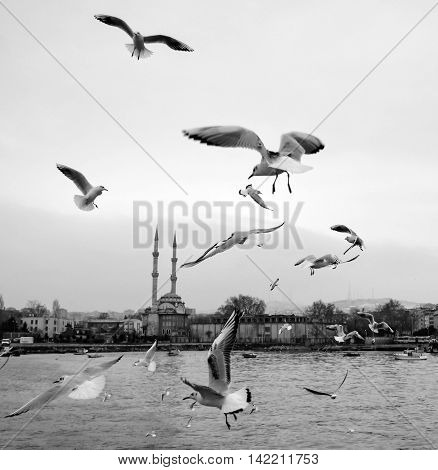 Istanbul Turkey -  Kadikoy dancing seagulls on the pier. Seagulls are fed with food provided by people around the harbor.