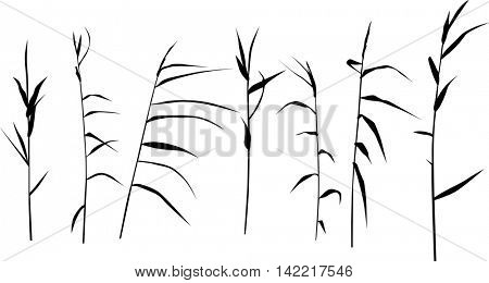 illustration with set of reed silhouettes isolated on white background