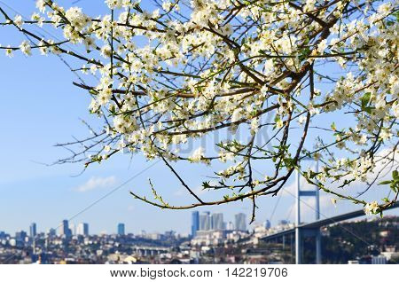 Bosphorus in spring. View through the branches of tree in Istanbul Turkey
