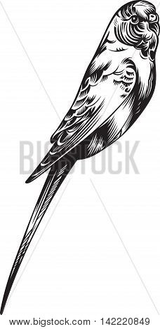 Vector illustration of Canary Bird, black and white style