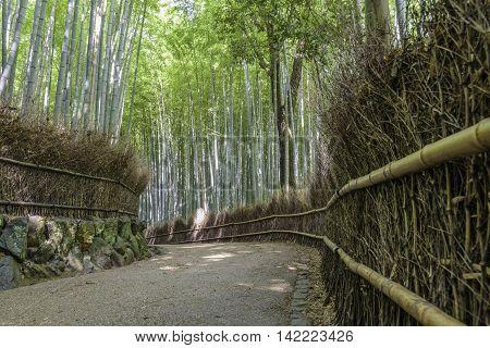 Bamboo forest in Arashiyama Kyoto Japan ( Old capital )