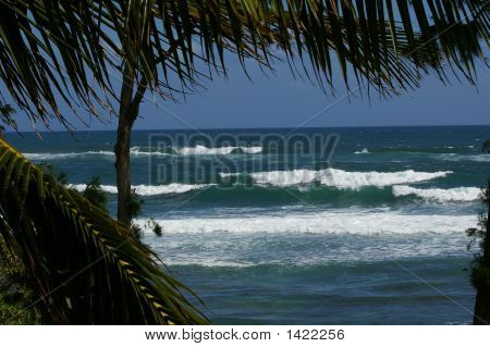 Hawaii Waves