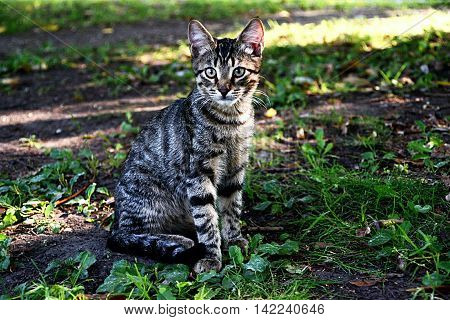 Look beautiful gray striped cat
