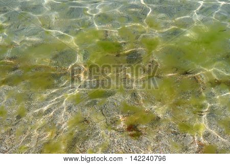 algae and slime in the water at the seaside