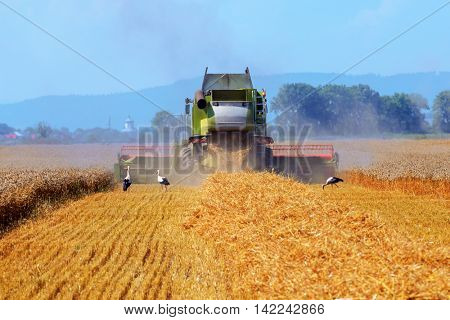 Amazing rural scene on autumn field with harvester and birds.