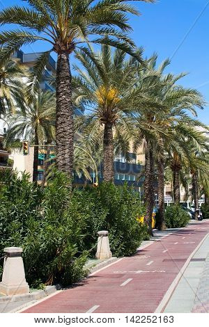 PALMA DE MALLORCA SPAIN - APRIL 19 2015: Bike track along the Paseo Maritimo with palm trees on a sunny spring day on April 19 2015 in Palma de Mallorca Balearic islands Spain.