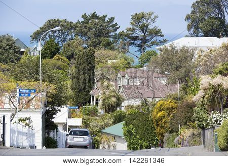 Hilly green streets of Napier town (New Zealand).