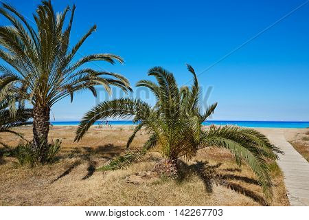 Las Marinas beach palm trees  in Denia at alicante province of spain