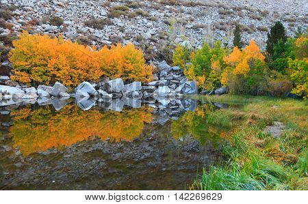 Reflections in small lake near Bishop California