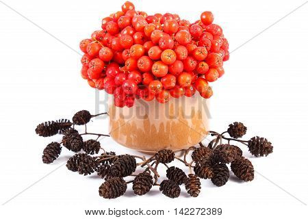 Bunch Of Red Autumn Rowan And Alder Cone On White Background
