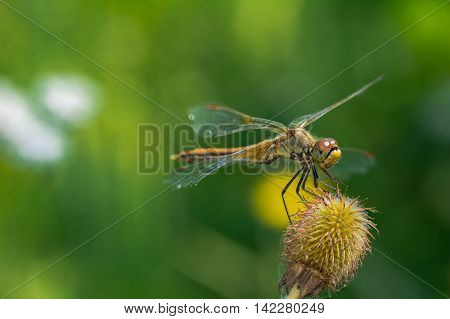 Dragonflies (lat. Odonata) -- team of well-flying predatory insects. Relatively large, with movable head, large eyes, short antennae setaceous, with four transparent wings with a dense network of veins elongated and slender abdomen.