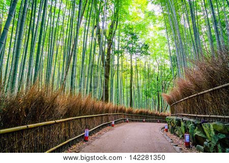 Bamboo Forest in Japan