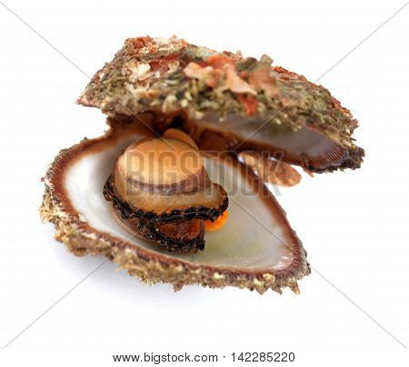 Raw Seafood In Opened Shell
