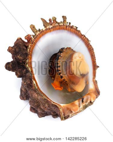 Raw seafood in opened shell. Isolated on white background. Close-up view
