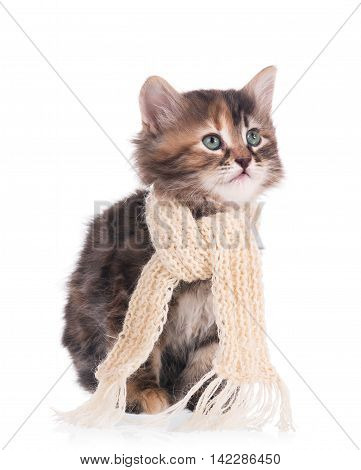 Sick siberian kitten with a scarf tied round a neck isolated on white background