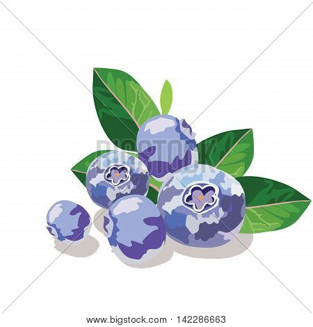 Blueberry or bilberry fruits isolated on white Vector